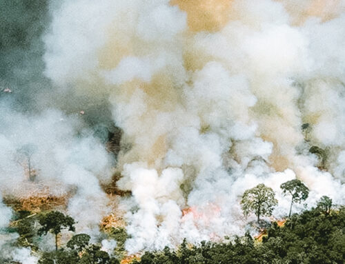 A Solution for the Amazon Rainforest?